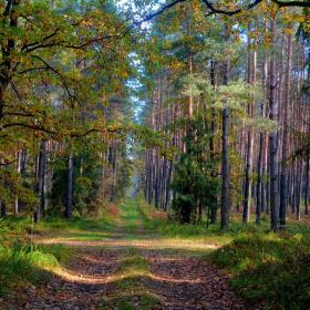 ... autumn forest in Poland