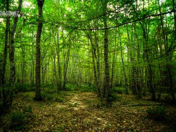 Longoz Ormanları Milli Parkı