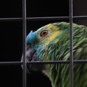 In captivity but happy