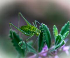 Yeşil Yeşil