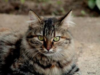 Kedi can'dır...