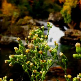 Sonbahar, çiçek, ırmak