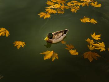 Yeşil Baş ile Sonbahar