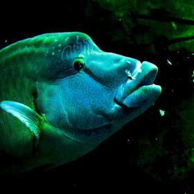 Blue Baby :)
