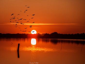 Kuşlar Gibi Cıvıldıyor  Yüreğim Bu Aralar