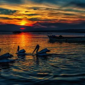 Göl Halleri