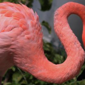 Flamingo moment...