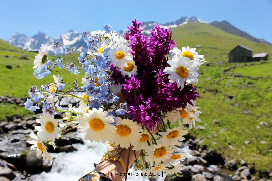 Yayla çiçekleri...