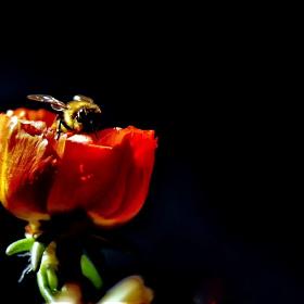 Arı ve çiçek