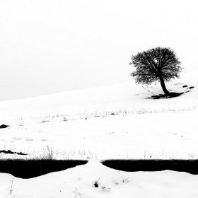Bir kadın, bir ağaç.