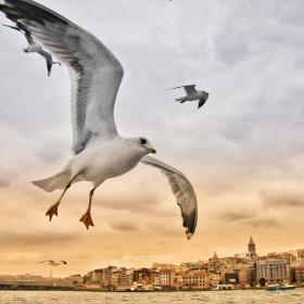İstanbul'un Güzelleri