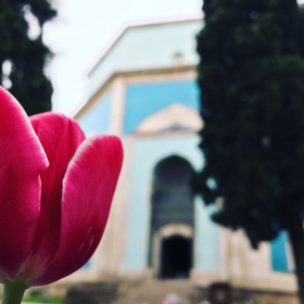 TULİP and GREENMOSQUE