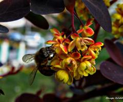Arı ve çiçeğin aşkı