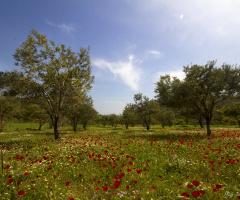 İzmirin dağlarında çiçekler açar