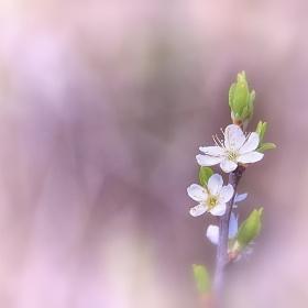 ..spring..