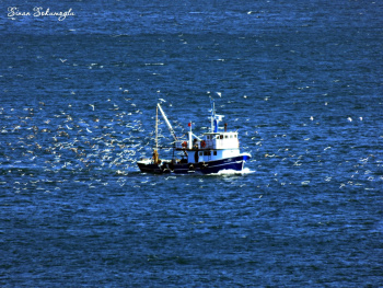 martılar ve balıkcı gemisi