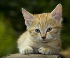 Tekir :) Her sahipsiz kedicik gibi :)