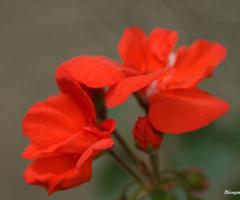 Kırmızı Renkler Ruhumuzu ve kalbimizi okşayan renk