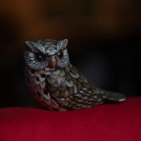 Silent Owl Moment....
