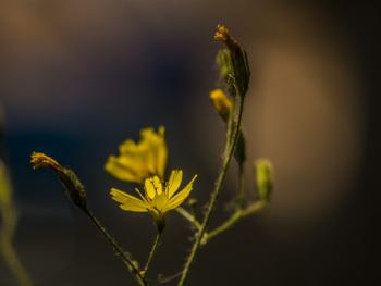 Makro Çiçekler 2