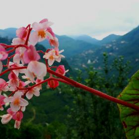 Çiçeğin manzarası