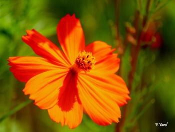 Kır Çiçeği . . .