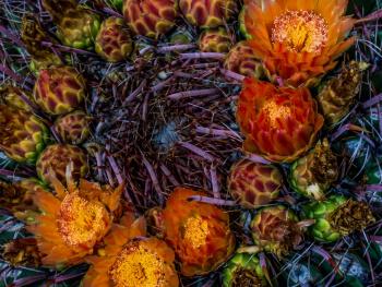 Amazing Sonoran Desert Colors