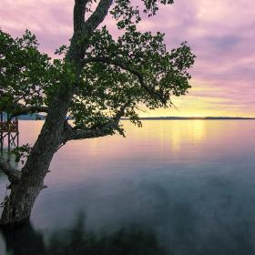 Just mangrove