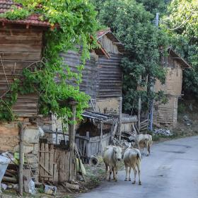 Köy Manzaraları