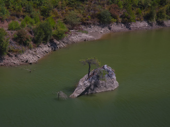 Barajın Yalnız Ağacı