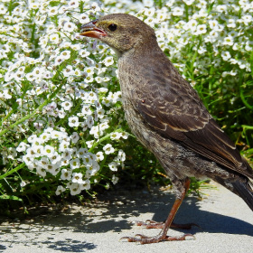 Bird with Alyssum