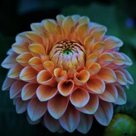 Çiçek...