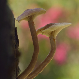 Two mushrooms