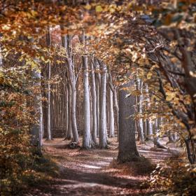 Ghost Wood of Nienhagen