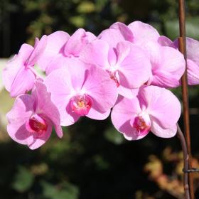 Orkidemmm