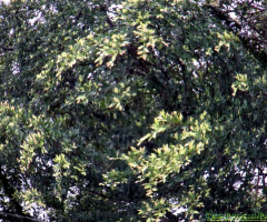 SWIRL OF BRANCHES