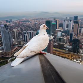 Kuş Bakışı