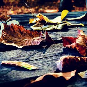 Sonbahardan kalanlar...
