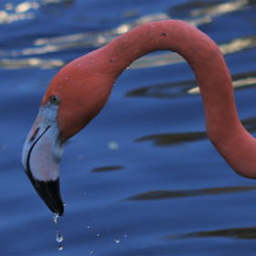 Flamingo moment ....