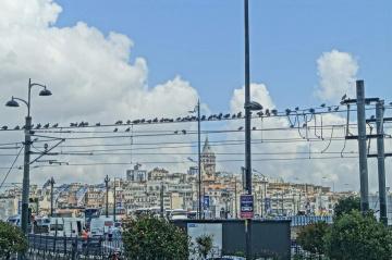 Şehrin Sakinleri