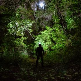 Lua cheia, floresta e um caminho.