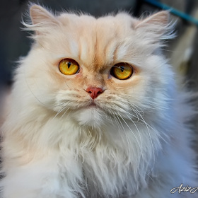 Bir kedim bile yok anlıyor musun.Hadi gülümse..))