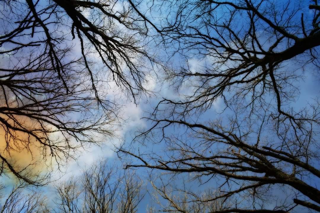 Yukarı bak