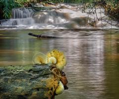 Cogumelo e cachoeira