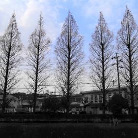 Trees on lightblue sky