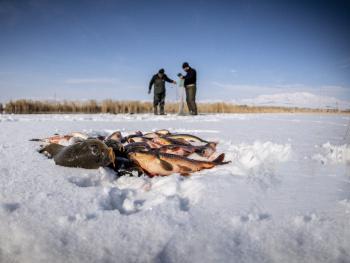 Buz ve balık
