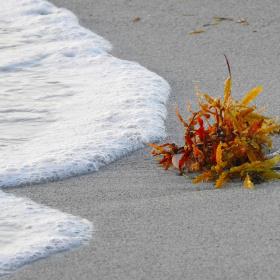Wave foam and seaweed