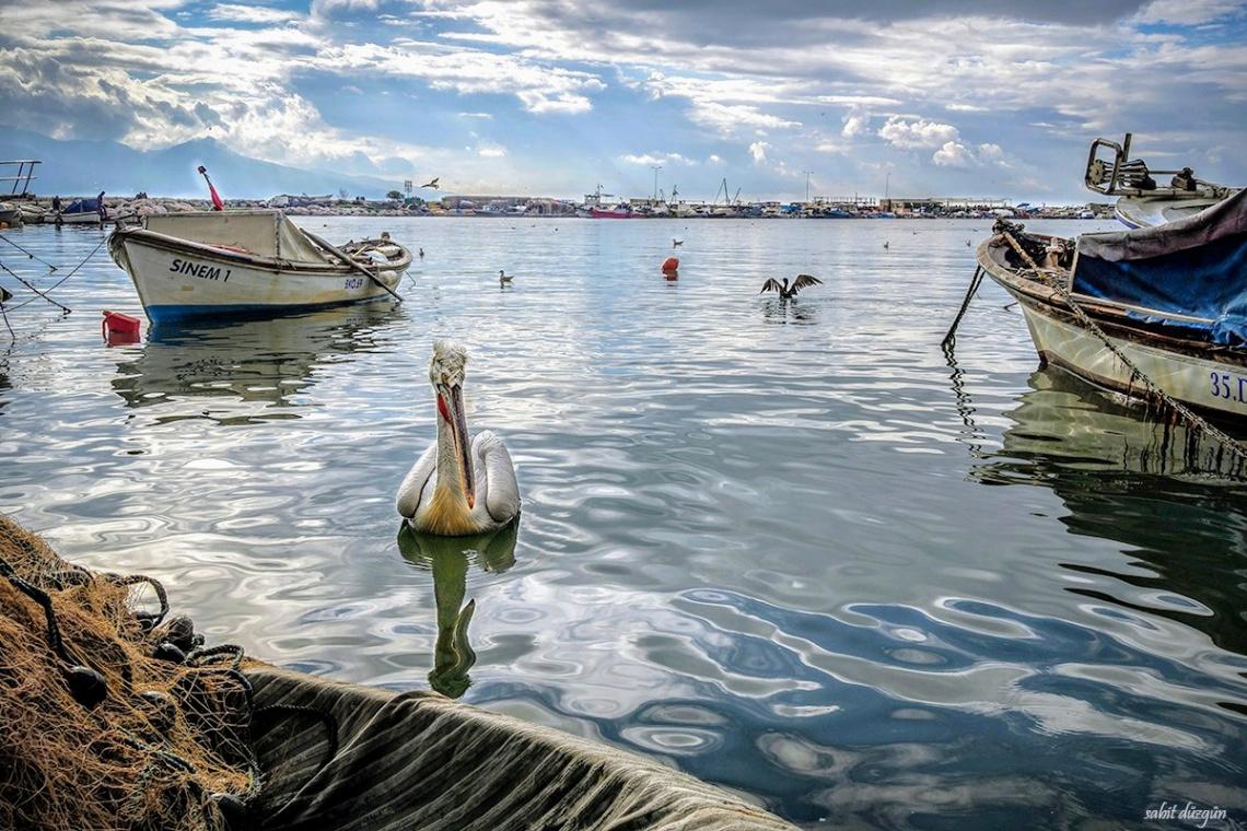 Bostanlı Balıkçı Barınağı..