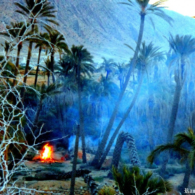 Fire and Palms