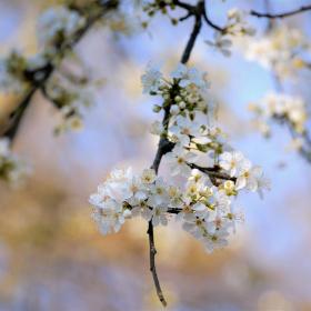 Bahar geldi..